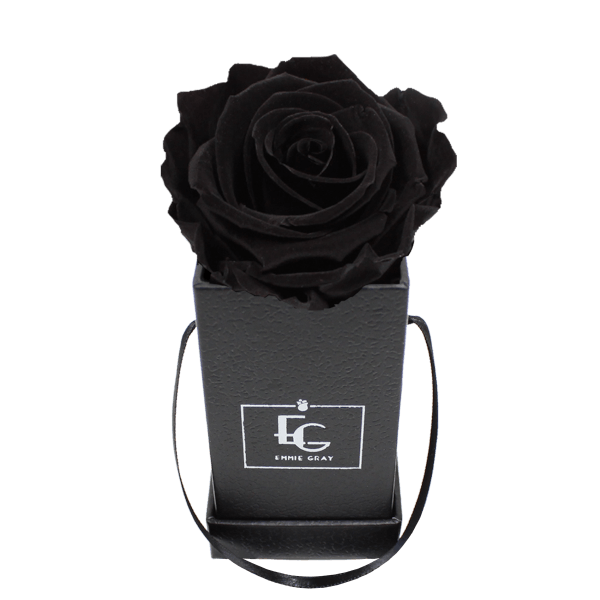 CLASSIC INFINITY ROSEBOX | BLACK BEAUTY | XXS