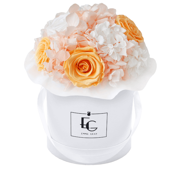 Splendid Hydrangea Mix Infinity Rosebox | Perfect Peach & Pure White | S