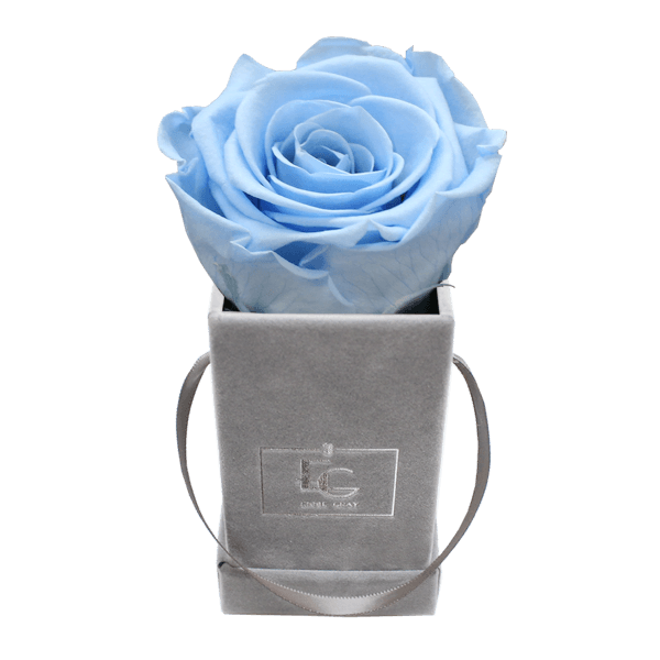 CLASSIC INFINITY ROSEBOX   BABY BLUE   XXS