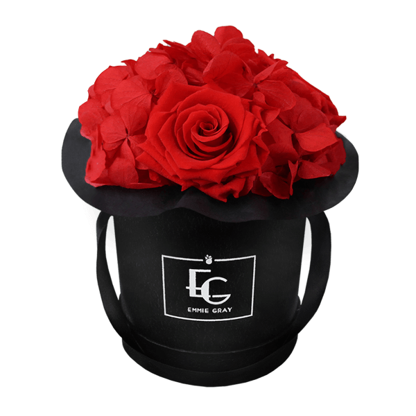 Splendid Hydrangea Infinity Rosebox   Vibrant Red   XS